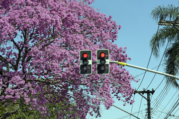 Red sign in traffic light in front of flowering pink tree