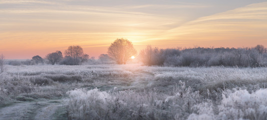 Winter rising sun illuminate white grass with hoarfrost