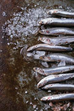 Raw fresh anchovies fishes