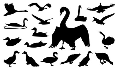 Duck Swan Goose Walking Swimming Flying Silhouette Collection