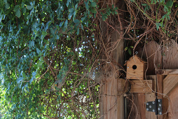 Birdhouse in a nook of a fence