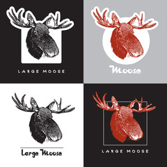 Portrait of moose (Alces alces). Set of vector images of elk head. Illustration for the hunt theme or zoo.