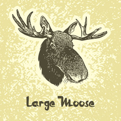 Portrait of moose (Alces alces). Vector images of elk head with antlers. Illustration for the hunt theme or zoo.