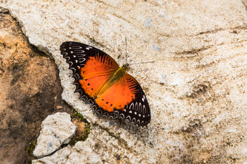 butterfly sitting on ground