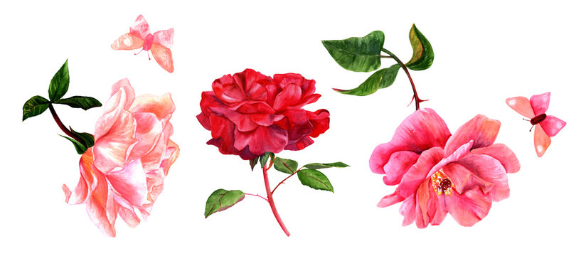 Set of watercolor pink and red rose flowers with butterflies