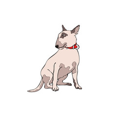 Dog. Bull Terrier. Isolated vector object on white background.