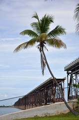 Palm tree and bridge in Florida Keys