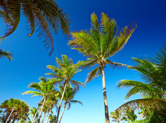 palm trees against a blue sky in tropical