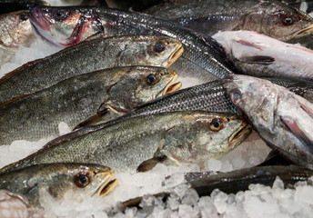 Umbrina cirrosa on ice in fish shop for sale.