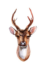 Deer - Front View isolated on white background. Hand painted animal illustration
