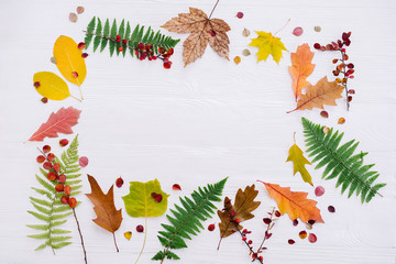 Autumn composition of colorful leaves on white wooden background. Top view, flat lay, copy space. Thanksgiving day concept.
