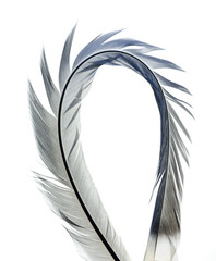 Abstract fractal object with feather texture, isolated on white background