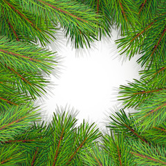 pine tree border background