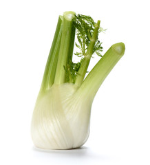 Fresh fennel bulb isolated on white