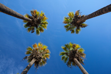 Nice four palm trees in the blue sky.