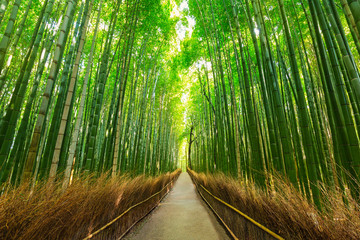 Foto op Canvas Bamboo Arashiyama bamboo forest in Kyoto Japan