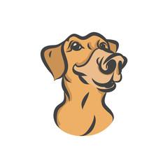 The head of a Labrador vector