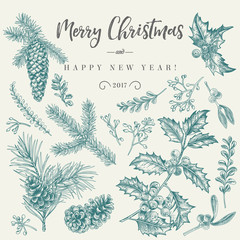 Christmas card with traditional plants.