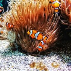 Ocean Clowns