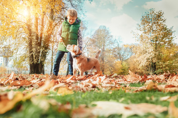 Wall Mural - Boy playing with dog in autumn park