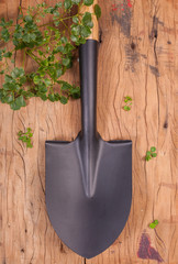 garden's black shovel made from coated steel put vertically on wood background with small fern plant.