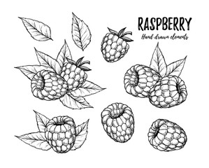 Hand drawn vector illustration. Collection of raspberry. Isolate
