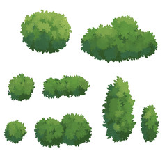 illustration of Bush