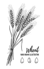 Hand drawn vector illustration - Wheat. Tribal design elements.