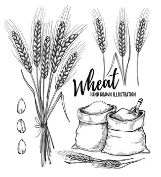 Hand drawn vector illustration - Wheat. Tribal design elements (