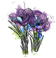 эскиз татуировки,цветок мак,акварель
