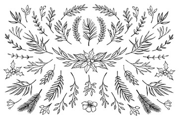 Hand drawn vector winter elements ( laurel, frame, leaf, poinset