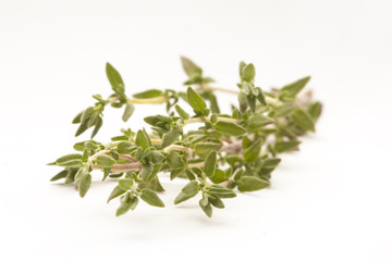 sprigs of thyme isolated against white