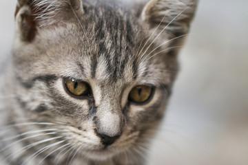 Portrait of green - eyed cat.