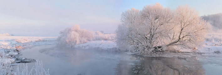 White tree in winter morning