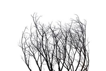 Dead branches.