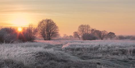 Christmas sun illuminate snowy meadow