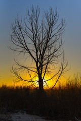 A vibrant, colorful sunset with a lone tree silhouette