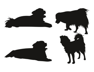 Silhouettes of dog