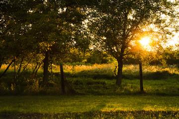 A beautiful, colorful autumn orchard