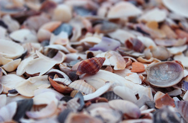 The whole shell lying on the beach. Many polygonal shells