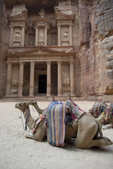 Camels rest in front of Al Khazneh Treasury ruins, Petra, Jordan