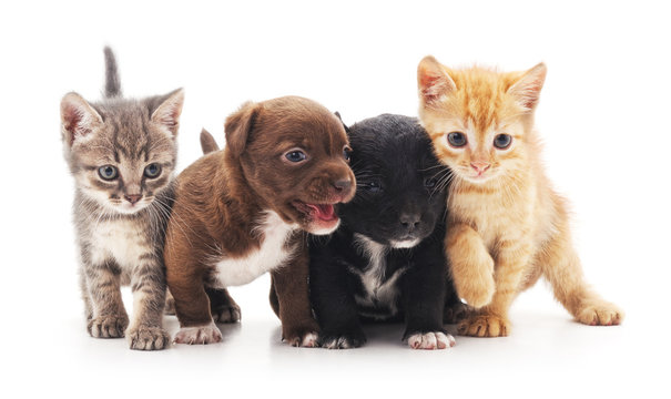 Kittens and puppies.