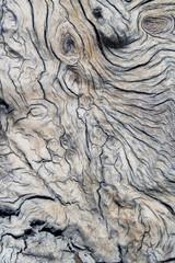 Weathered Accacia Log