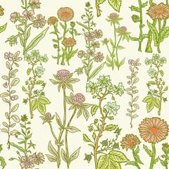 Seamless vintage herbal pattern, medicinal herbs and plants