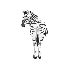zebra illustration. back view