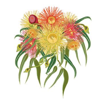 Flowering Gumtree Wreath Vector Illustration