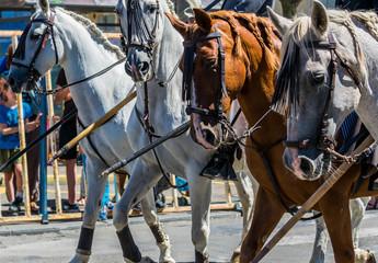Abrivado avec taureaux et cavaliers espagnol.