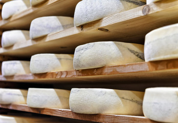 Wheels of aging Cheese at ripening cellar Franche Comte