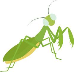 Green funny cartoon Mantis