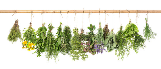 Fresh herbs hanging Basil rosemary thyme mint dill sage